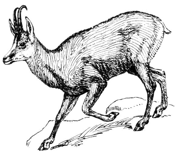 mountain goat head logo
