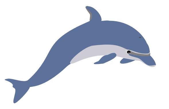 Dolphin Enrique Meza C 02