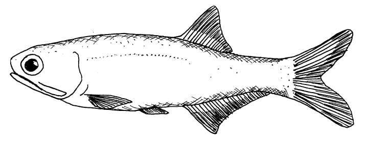 Drawing of a fish best images collections hd for gadget for Wyoming game and fish draw results