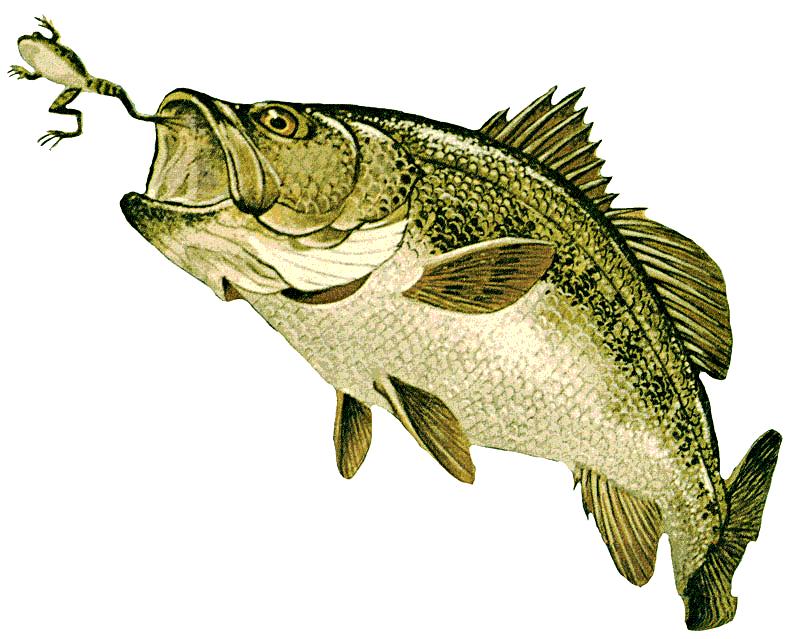 Fish Creations - Fish Fiberglass Reproductions