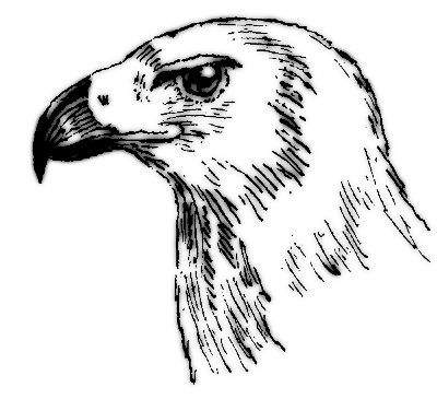 Hooked beak bw animals birds bird parts beak hooked for Owl beak drawing