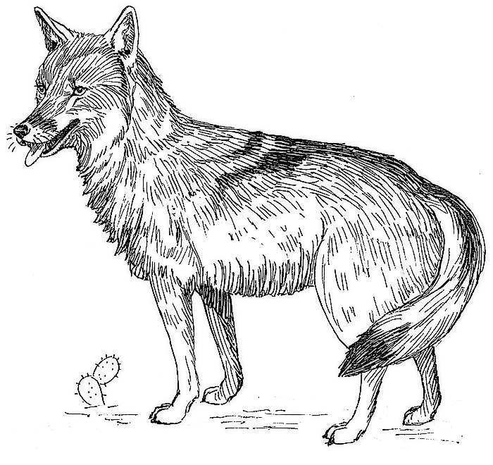 Fathers Day Coloring Page furthermore How To Draw Dogo From The Lion Guard further Dibujos Para Colorear De Animales Del Desierto in addition 272749321166241645 in addition How To Draw Scar From Lion King. on hyena coloring