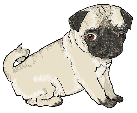 pug puppy - /animals/dogs/P/Pug/pug_puppy.png.html (475 x 391 Pixel)
