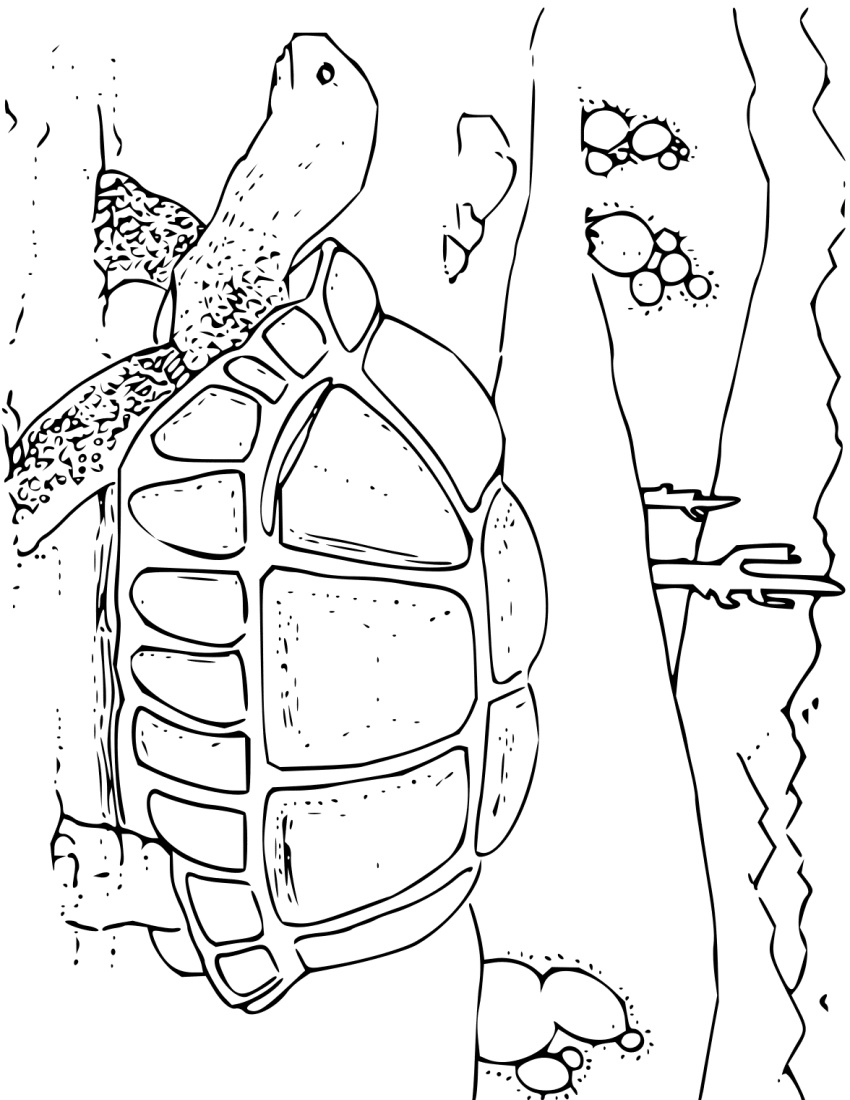 coloring book desert tortoise education coloring pages animals