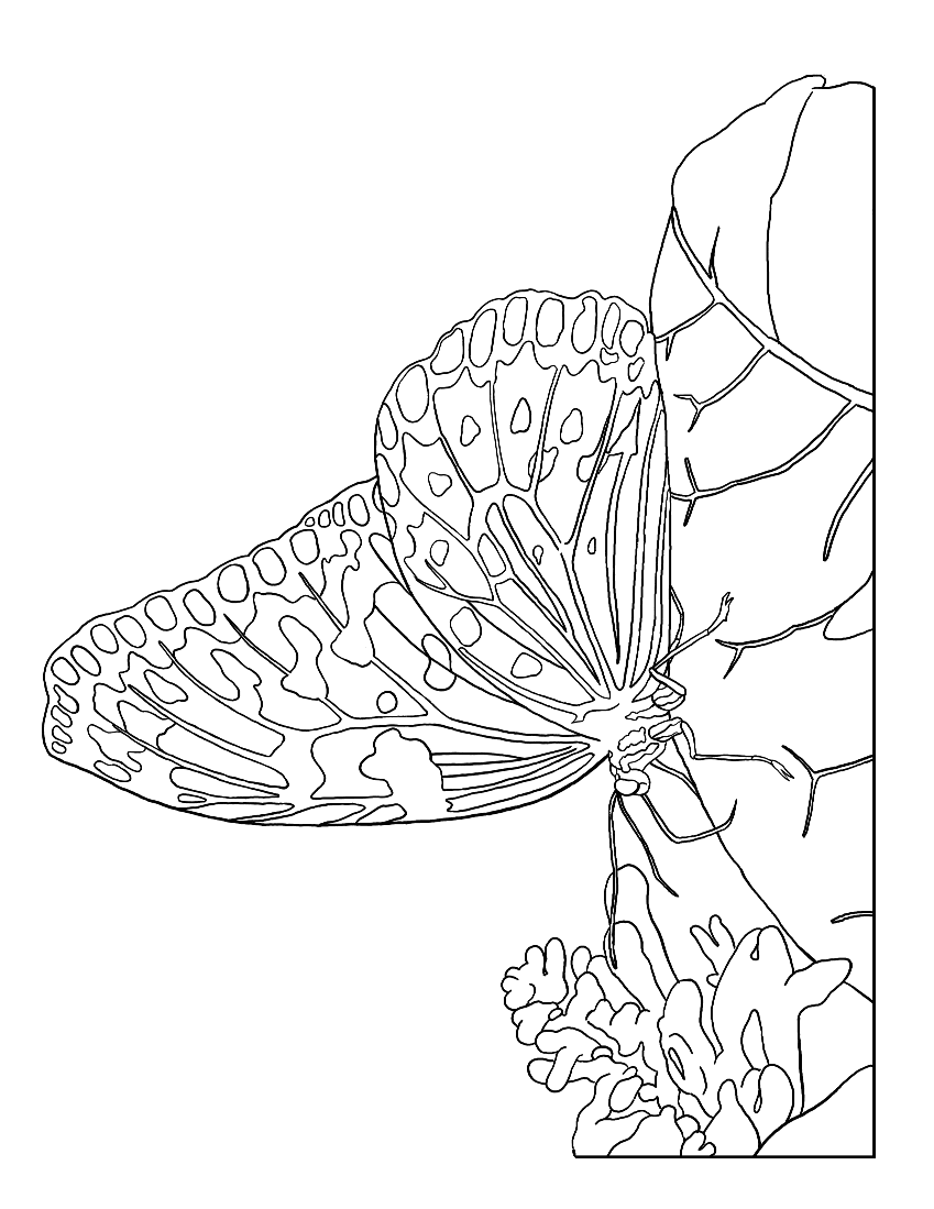 butterfly coloring page educationcoloring pages