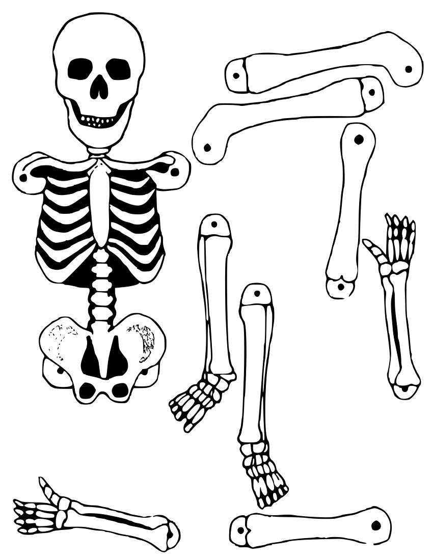 Skeleton Cutout Holiday Halloween Skeleton Skeletons 2