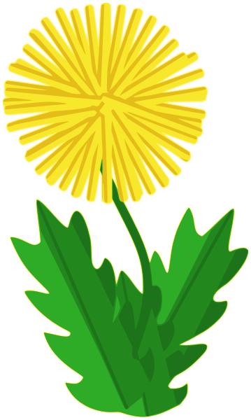 dandelion abstracted - /plants/flowers/_D/dandelion/dandelion ...