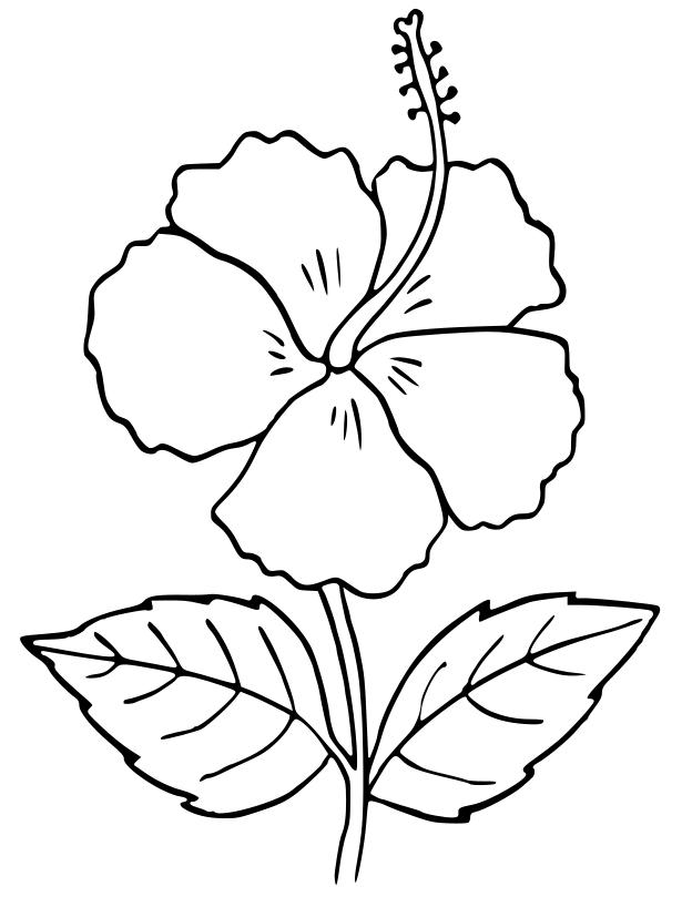 Hibiscus outline - /plants/flowers/_H/hibiscus/Hibiscus ...