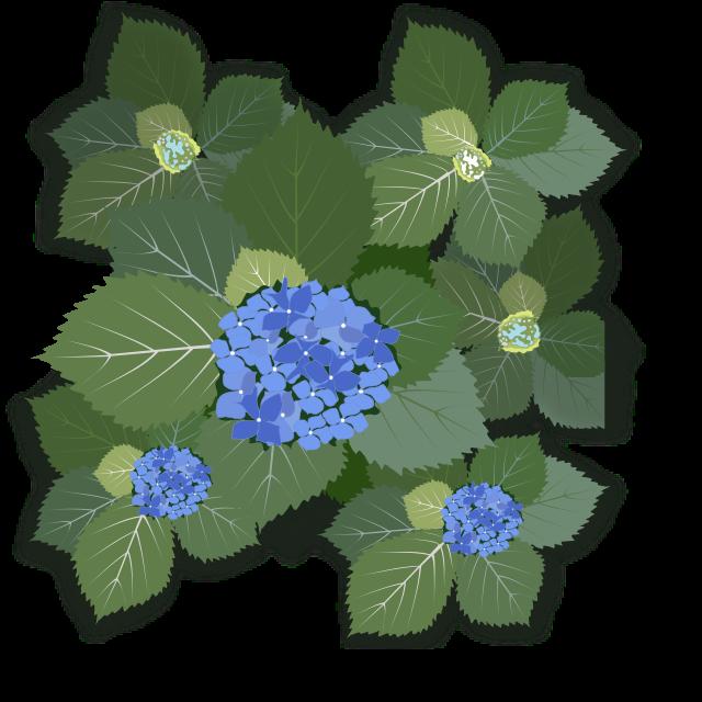 hydrangea macrophylla   plants  flowers   h  hydrangea hydrangea clip art no background hydrangea clip art border free