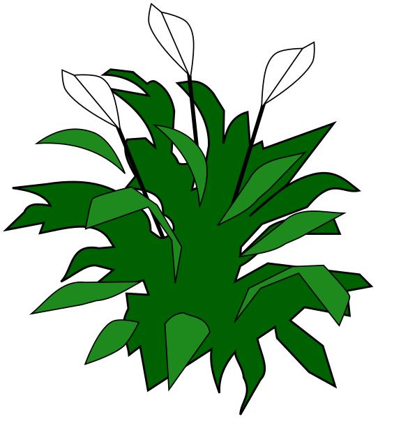 Lepelplant  Wikipedia