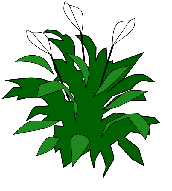 spathiphyllum   plants  flowers   l  lily  peace lily clip art plant a seed clip art planets