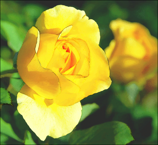 yellow rose 2   plants  flowers   r  rose  rose photos  yellow clip art plants and flowers clip art plants and flowers