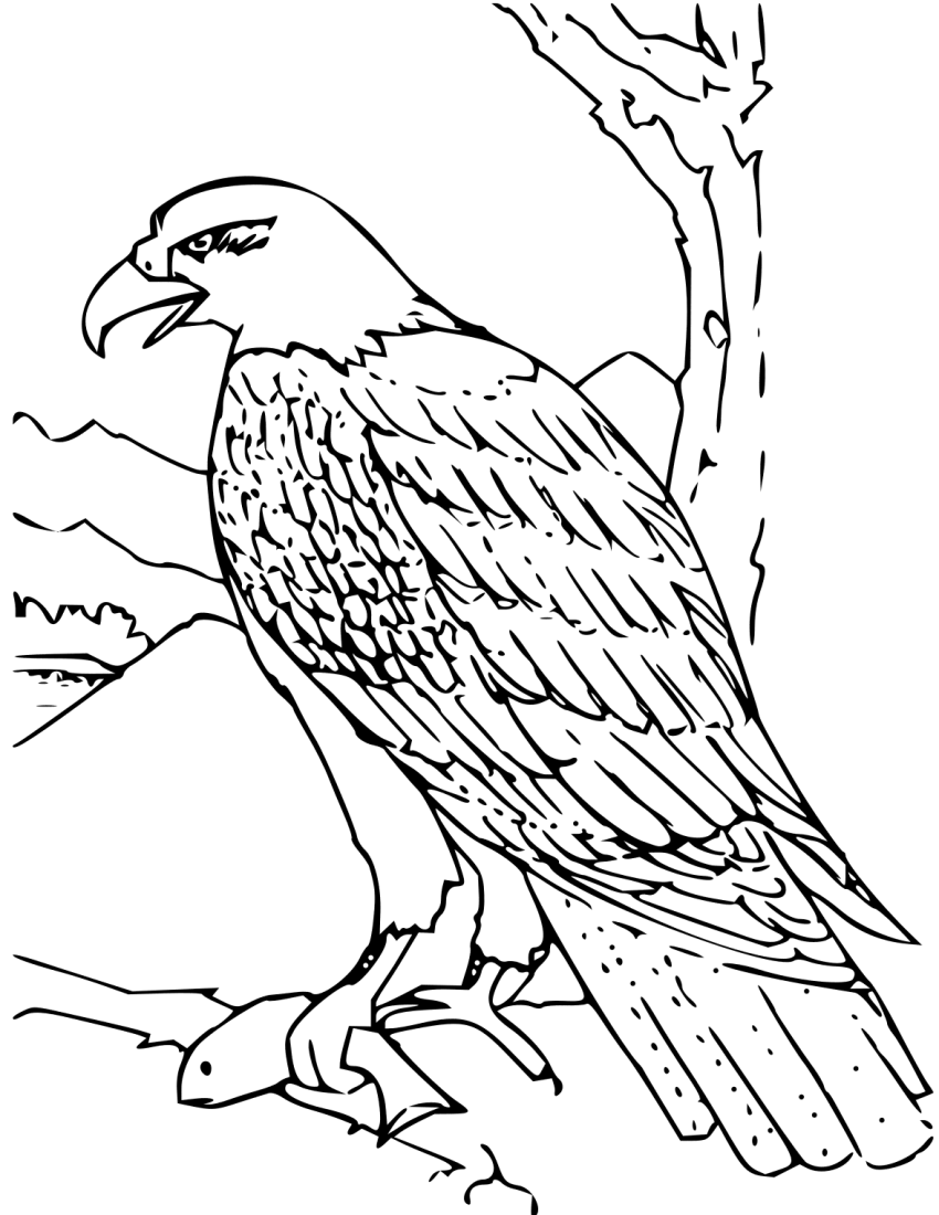 Coloring Book Bald Eagle - /education/coloring_pages/animals ...