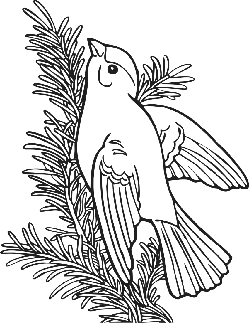 Coloring Book Willow Goldfinch - /education/coloring_pages/animals ...