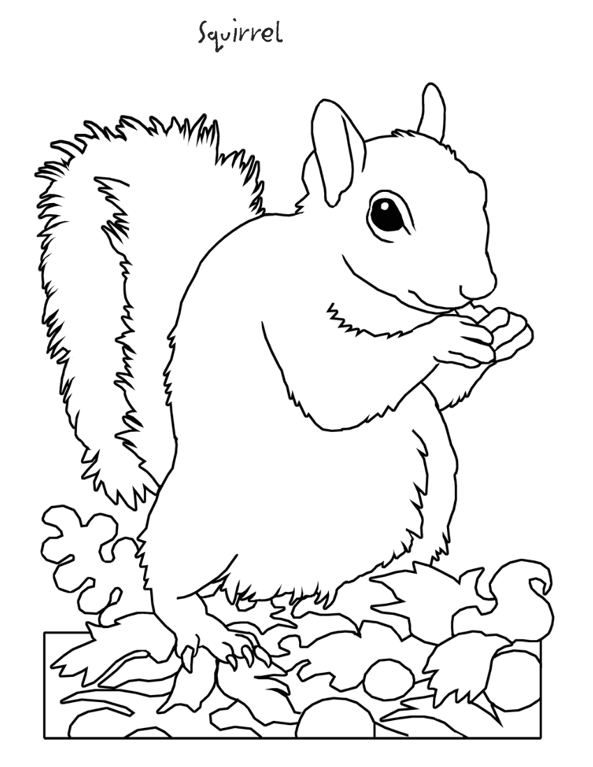 squirrel coloring page - /education/coloring_pages/animals ...