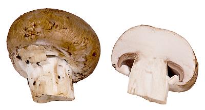 White Mushroom Baby Food