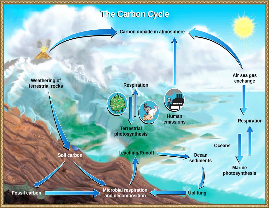 Carbon cycle usgs geographydiagramscarboncycleusgsgml ccuart Gallery
