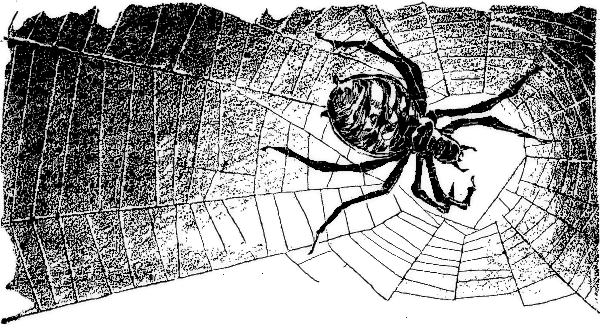 spider in dark web   holiday  halloween  spider  spider in web clip art images web clip art png