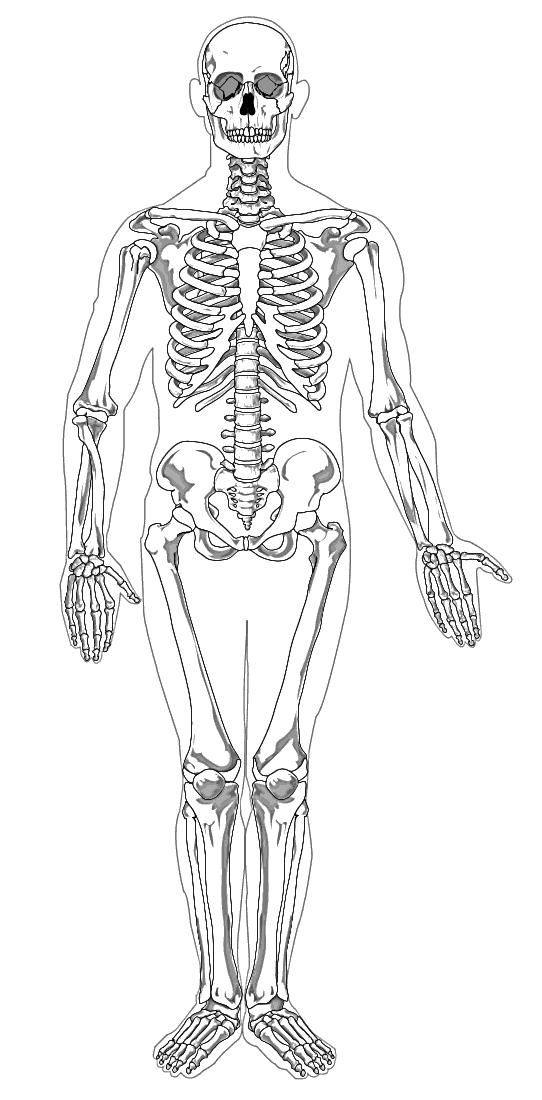 Human Skeleton Full Page Bw Medicalanatomybonesskeletons