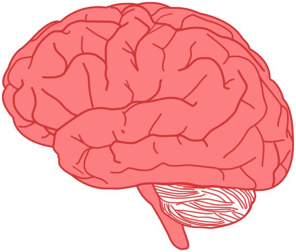 brain vector pink   medical  anatomy  brain  brain 3  brain brain clipart jpg brain clipart happy