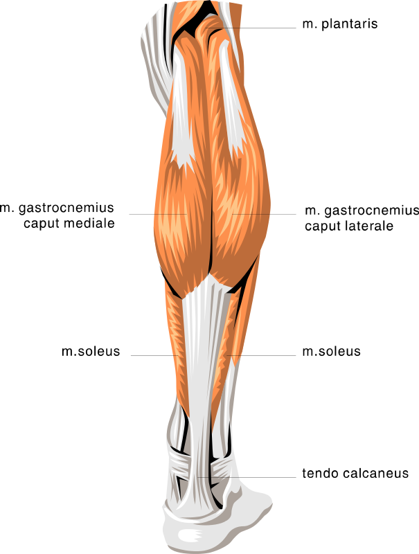 how to build my calf muscles