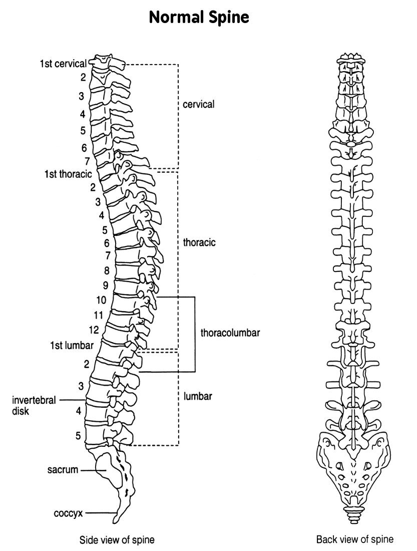 Spine normal views