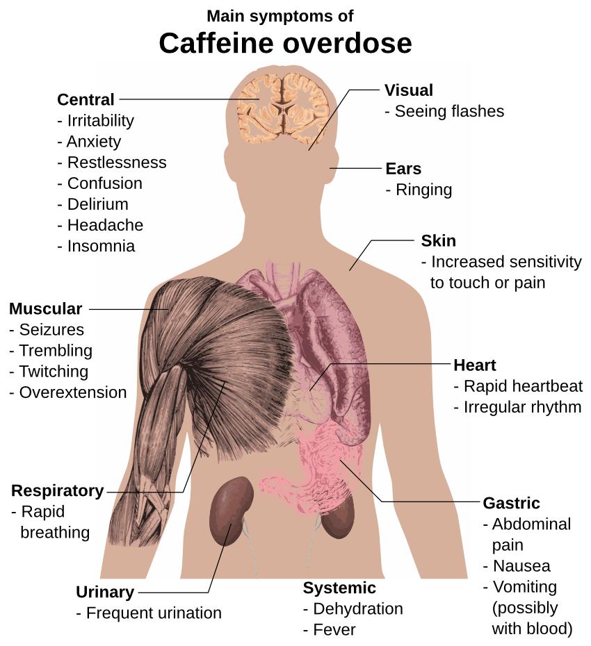 caffeine overdose symptoms - /medical/medical_problems/drugs, Skeleton