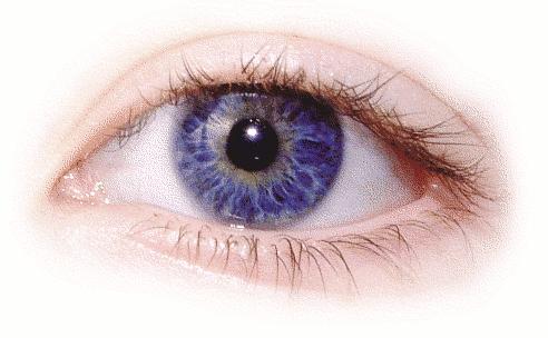 amanda eye right   people  bodypart  eye  amanda eye right clipart of eyes for poster boards clipart of eyeglasses