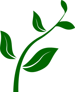 plant stem   plants  assorted  p  plant stem png html download clipart for free download clipart for free