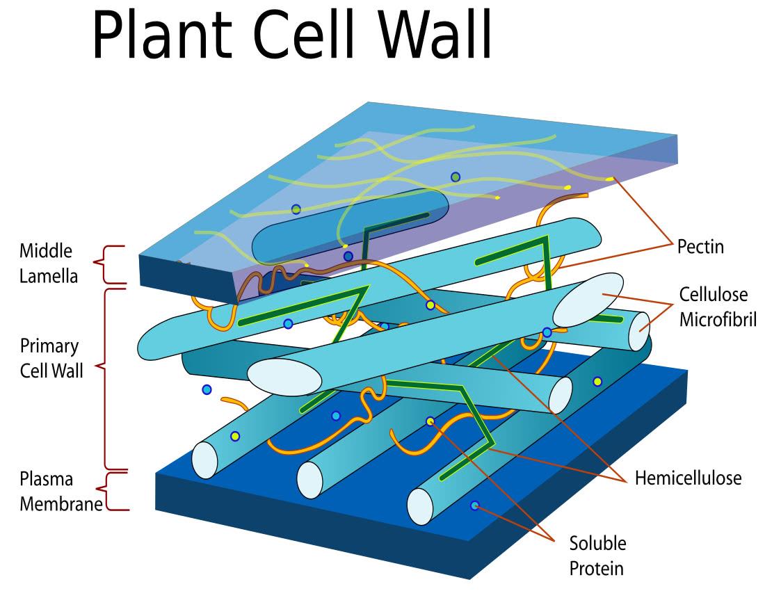 Wjec Biology  1 2