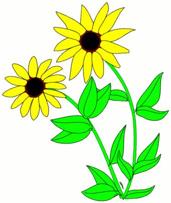 Blackeyed Susan Plants Flowers B Black Eyed Susan