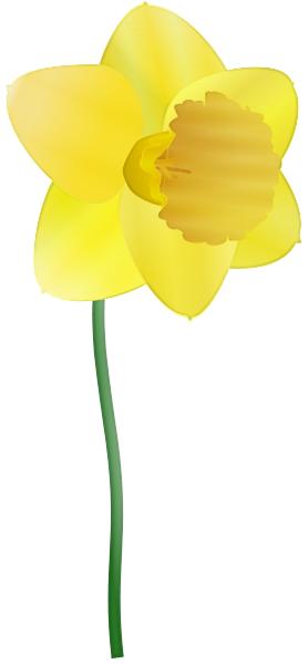 daffodil   plants  flowers   d  daffodil  daffodil png html daffodil clipart images daffodil clip art clip art