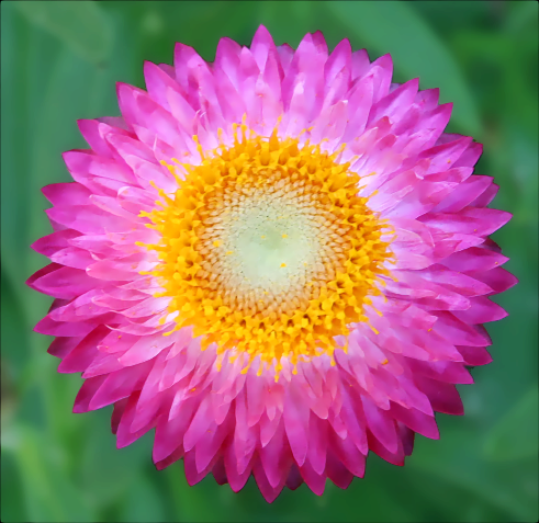 Pink Yellow Flower Plants Flowers Colors Png Html