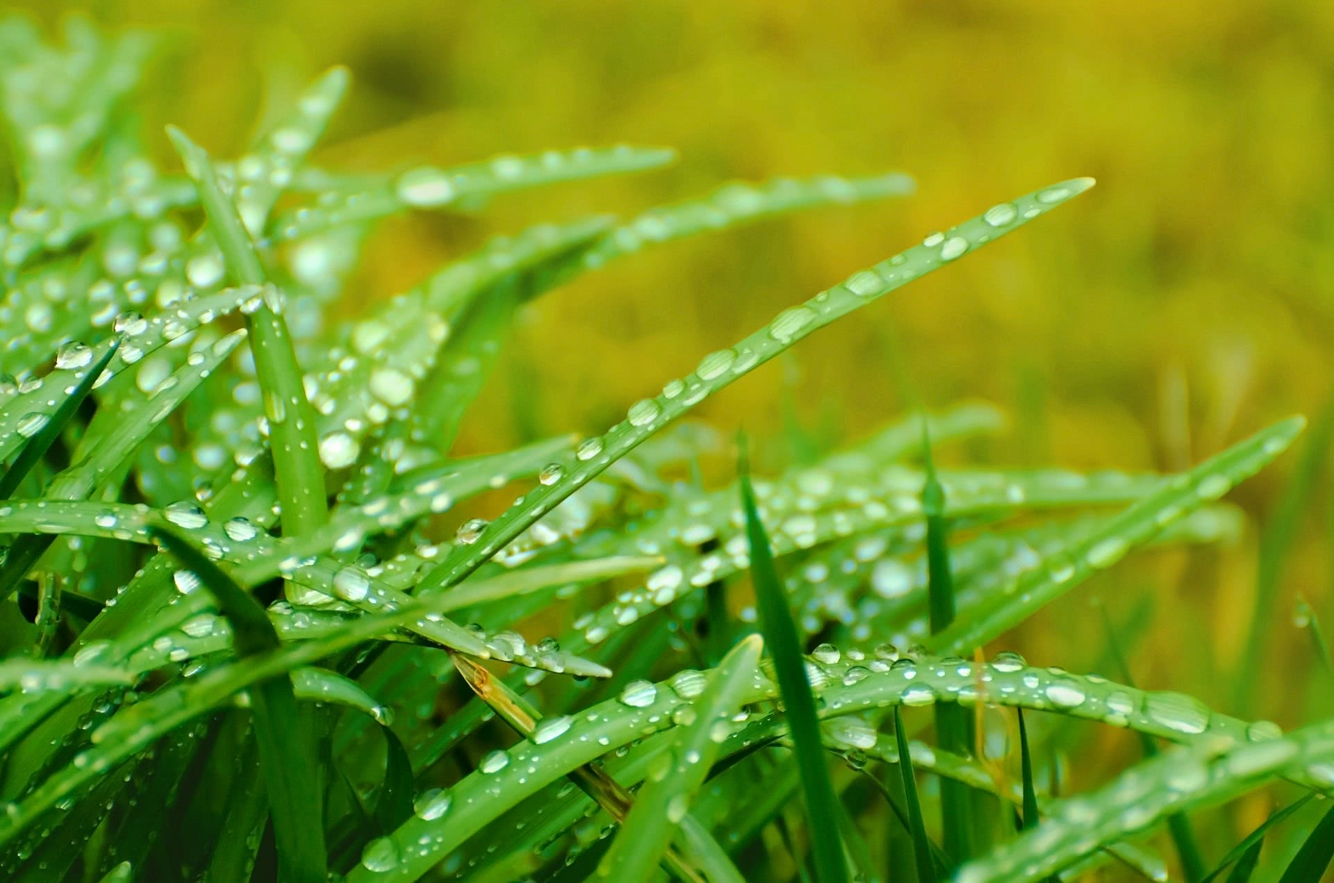 Image result for wet grass