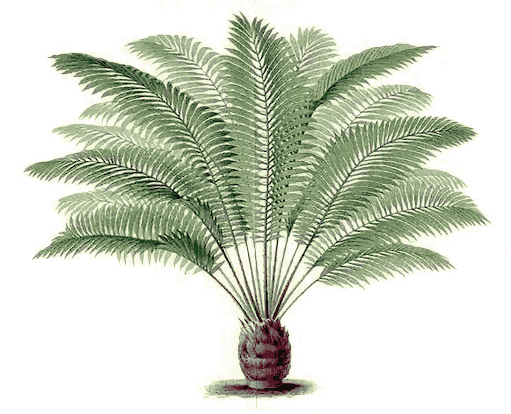 fern tree png. download pngwebpjpg. fern tree png g