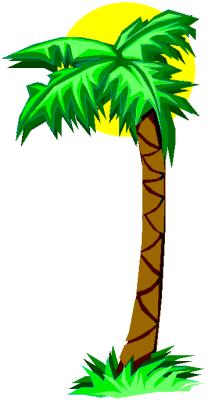 palm tree 4   plants  trees  palm  palm tree 4 png html clip art palm tree plan view clipart palm tree png