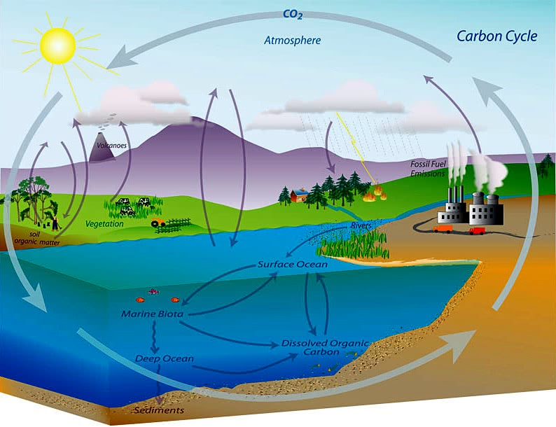 The carbon cycle diagram of iowa circuit connection diagram who to blame for rising co2 iowa climate science education rh iowaclimate org global carbon cycle diagram carbon dioxide oxygen cycle diagram ccuart Images