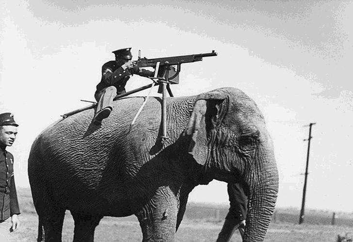 WWI elephant